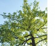 Referenzbilder Thomas Knebel - Kommunales Grün
